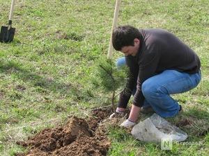 Более 5 тысяч га лесов посадят в Нижегородской области