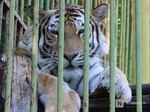 Защитники нижегородского «Мишутки» требуют вернуть медведицу и мангустов обратно в зоопарк