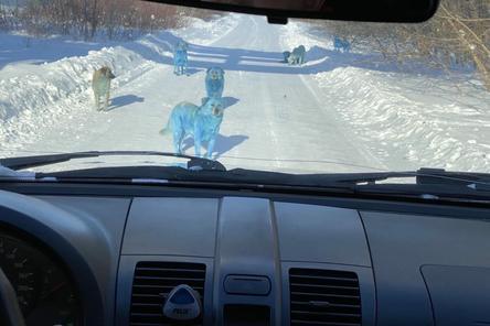 Управляющий «Дзержинского оргстекла» предположил, откуда взялись голубые собаки