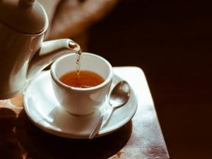 Что такое чайный гриб и зачем его все держат на подоконнике