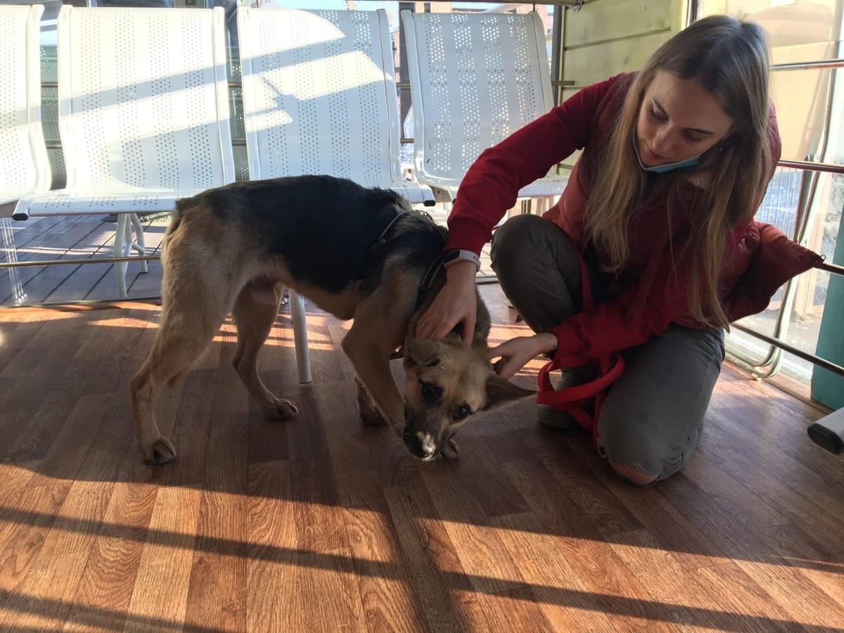 Собаке, спасенной в Финском заливе, помогли ветеринары из Нижнего Новгорода - фото 1