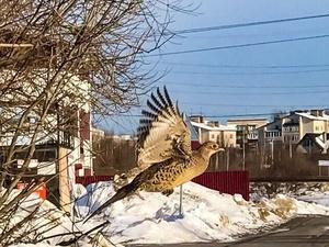 Нижегородец сфотографировал редкую для городских улиц птицу