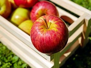 В Роскачестве рассказали, как выбрать самые вкусные яблоки