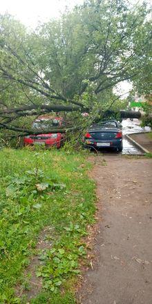 Машины завалило деревьями после урагана в Нижегородской области - фото 2